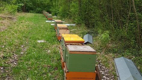 Million-Bienen-Ebreichsdorf-gestohlen1