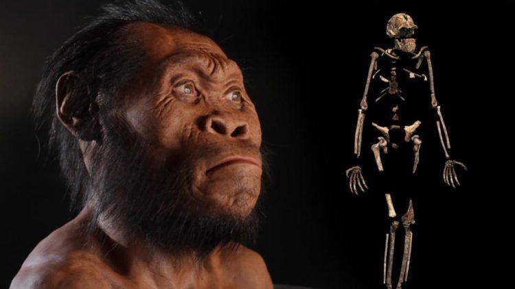 صورة لفرد من هومو ناليدي تظهر ملامح وجهه كما لو كان حيًا، وهيكل عظمي ( مصدر الصورة : National geographic video