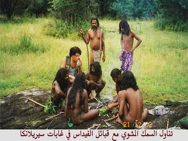 shahawy1