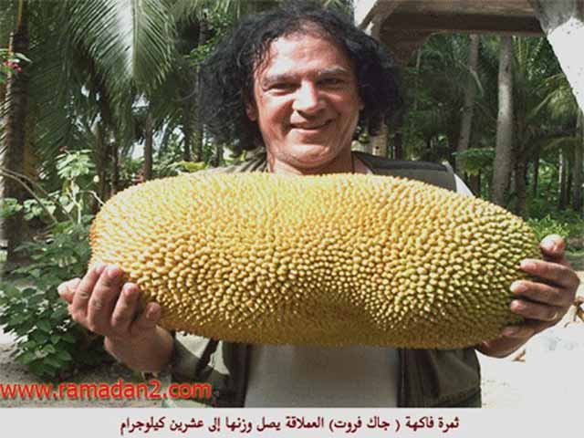 shahawy6