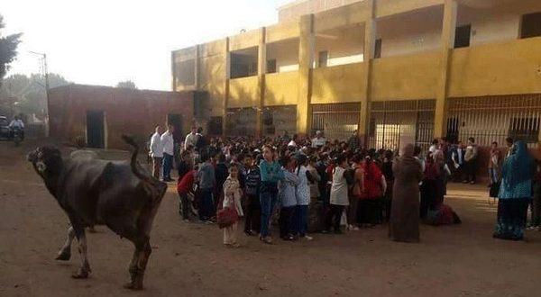 صورة صادمة.. جاموسة في طابور الصباح بمدرسة حكومية