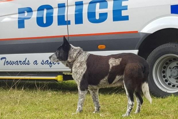 Gute-Hund-in-Australia-1