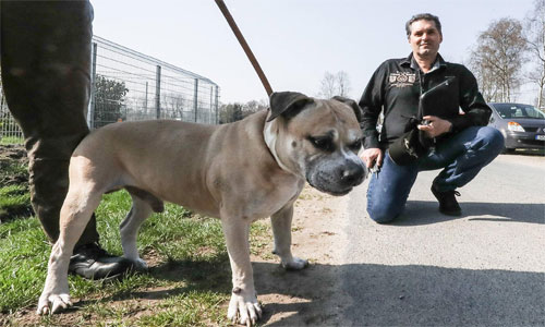 Mann-Hunde-syrische-Familie