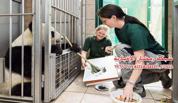 Panda-Malen