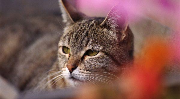خبير الحيوانات الأليفة : تربية القطط يشعر بالسعادة ويقلل من نوبات القلب