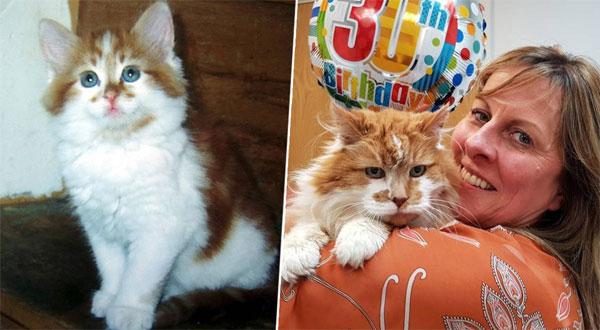 بالصور: وفاة أكبر قط معمر في العالم عن عمر 31 عامًا
